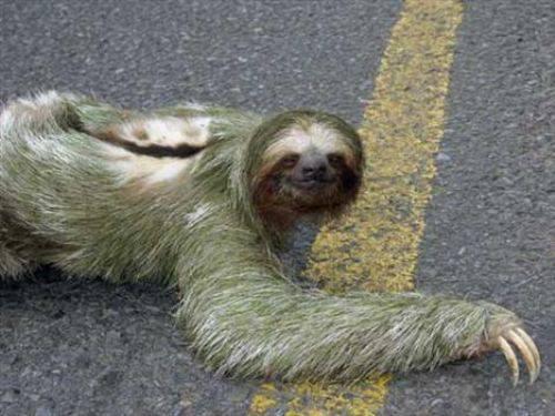 Gelmiş Geçmiş En Korkunç Hayvanlar Resim 1