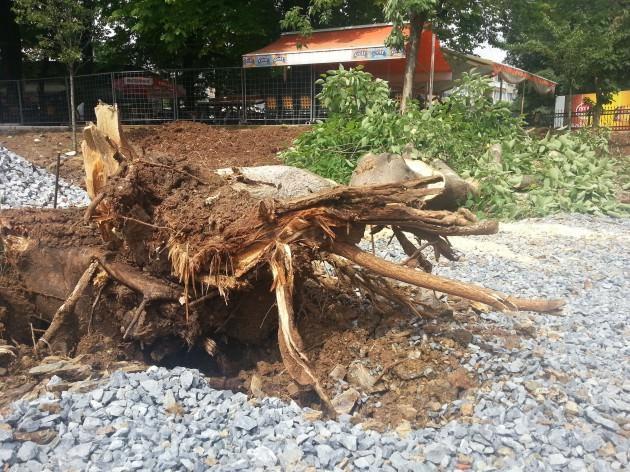 CHP'li Belediye Bakırköy'de ağaç kesti