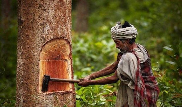Medeniyetin göbeğinde doğal yaşam!