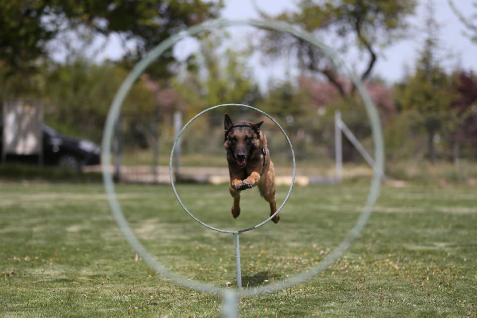Zorlu görevlerin kahramanları: Köpekler