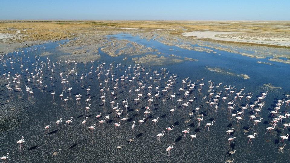 Flamingo cenneti 'Tuz Gölü'