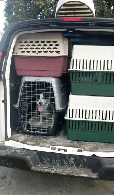 <p>Tahliye edilenler yalnızca insanlar değil, köpekler de kıyıdan uzaklaştırılıyor.</p>