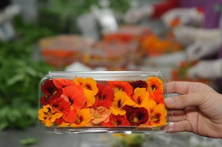 Bu çiçekler koklamak için değil yemek için ile ilgili görsel sonucu