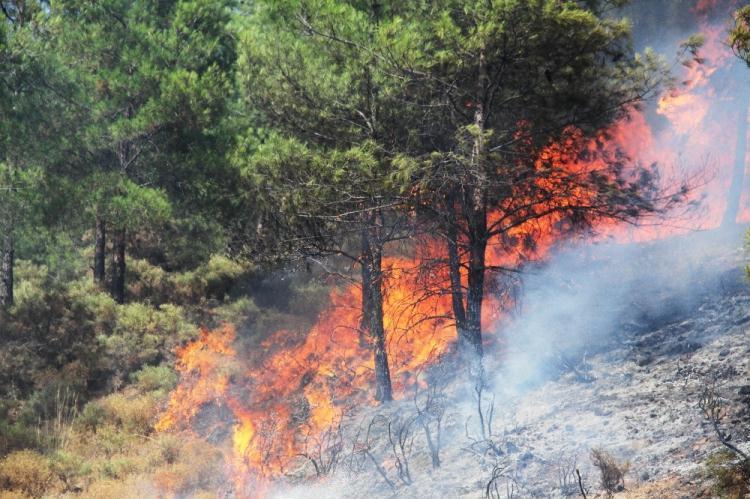 <p>Dün öğleden sonradan bu yana yangından yangına koşan orman ve itfaiye ekipleri kısa sürede yangına müdahale etti. Yangını kontrol altına alma çalışmaları havadan ve karadan yoğun bir şekilde devam ediyor.</p>