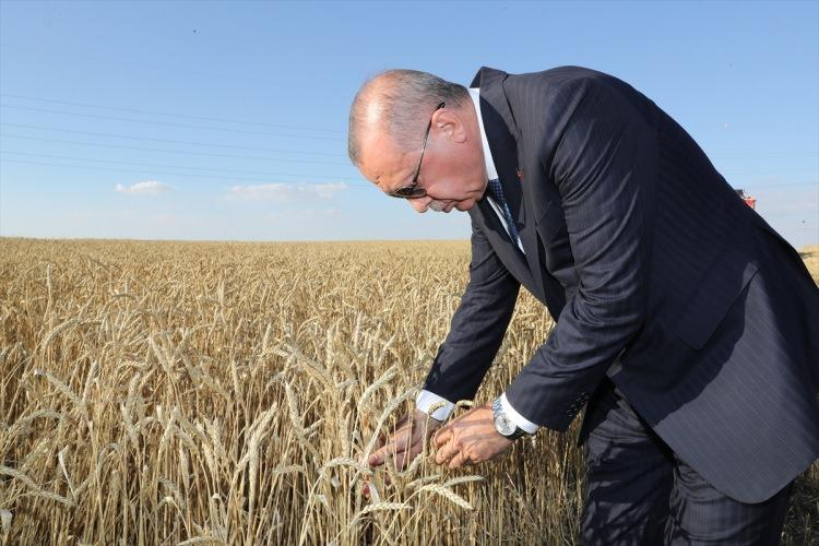<p>Türkiye Cumhurbaşkanı Recep Tayyip Erdoğan, Polatlı Tarım İşletme Müdürlüğü'nde TİGEM 69. Geleneksel Hasat Bayramı'na katıldı. Cumhurbaşkanı Erdoğan, biçerdöver kullandı.</p>