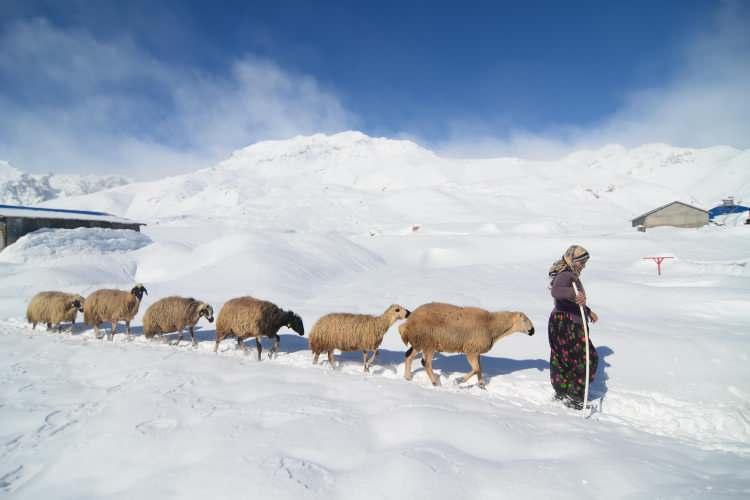 <p>Tunceli'nin Ovacık ilçesinde çetin geçen kış mevsimi başta besiciler olmak üzere vatandaşlara zor anlar yaşatıyor. Türkiye'nin en çok kar yağışı alan yerleşim yerleri arasında bulunan 6 bin 696 nüfuslu Ovacık ilçesinde aralık ayından bu yana kar etkili oluyor. Kar kalınlığının yüksek kesimlerde yer yer 2 metreye kadar ulaştığı ilçede çetin kış koşulları, en çok dağ köylerinde hayvancılıkla uğraşan besicileri etkiliyor.</p>