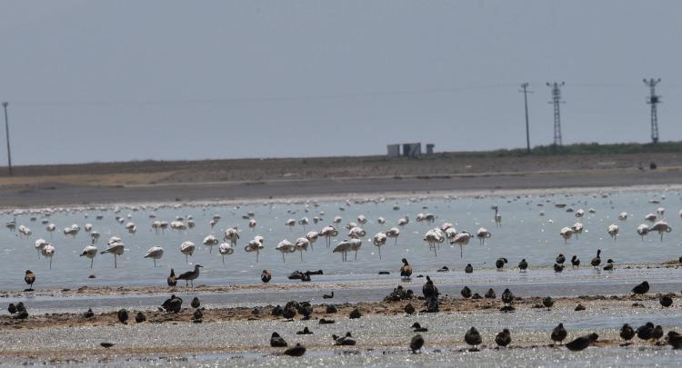 <p>Arin Gölü'nün sığ alanlarında konaklayan ve beslenen flamingolar, bu yıl ördeklerle birlikte paylaştıkları Arin Gölü'nde yine kartpostallık görüntüler oluşturuyor.</p>