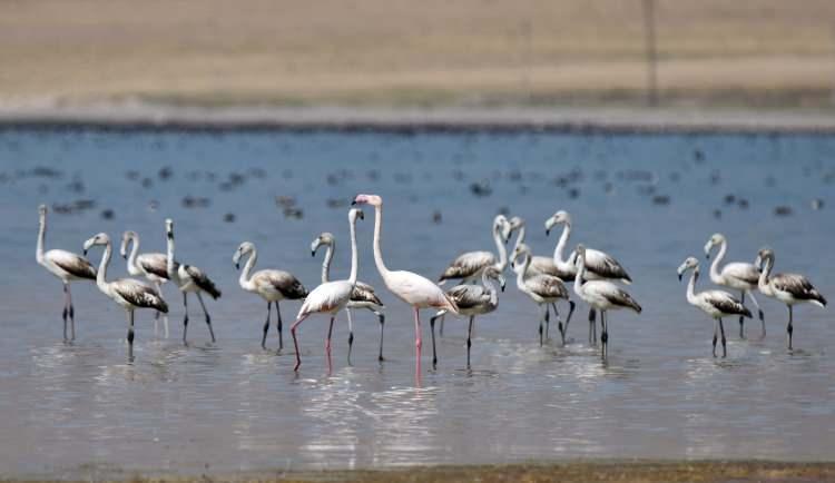 <p>Flamingoların Arin Gölü'nü renklendirdikleri eşsiz görüntüler havadan drone ile görüntülendi.</p>