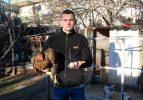 Bu tavukların tanesi 2 bin, yumurtası 40 lira