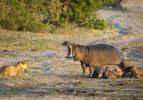 Vahşi doğada ilginç anlar