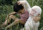 Doğanın beyazları! Albino hayvanlar