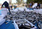 Dalyan kefalinin yarısı Suriye ve Mısır'a ihraç ediliyor