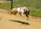 İşte dünyanın en hızlı hayvanları