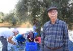 Turizm merkezinin 'yeşil altını'nda hasat zamanı