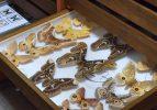 Türkiye'nin böcekleri, 82 yıldır bu müzede sergileniyor