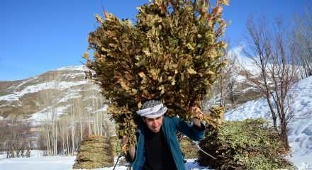 Yazın yükseklerde biriktirdikleri odunları ve otları kızaklarla taşıyorlar