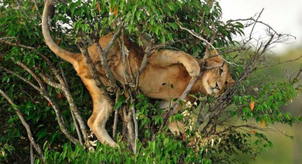 Başlarına bela açan hayvanların zor anları