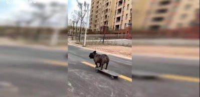 Daha önce hiç kaykay kullanan köpek gördünüz mü?