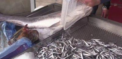 16 kiloluk minakop balığı yakalandı