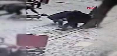 2 pitbull 'Rus Finosu'na saldırdı! Dehşet anları...