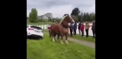 Atın inanılmaz gücü! Çukura düşen otomobili...