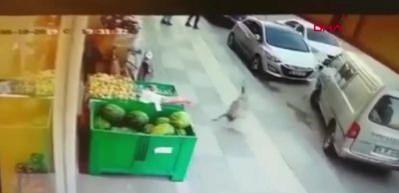 Vicdansız adam köpeğe böyle tekme attı
