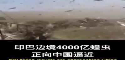 Çin, Pakistan'daki çekirge istilasına karşı ördek ordusu kuruyor