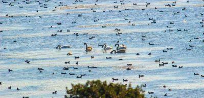 Bafa Gölü kuş sürüleriyle nefes kesiyor
