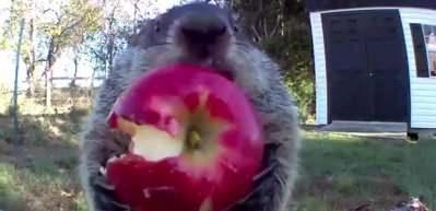 Bahçesine yerleştirdiği kamerayla meyve hırsızlarını böyle yakaladı