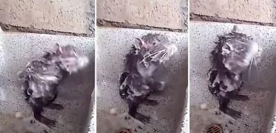 Banyo yaparken yakalanan fare