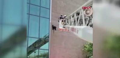 Başakşehir'de okul duvarına çıkan keçi böyle indirildi