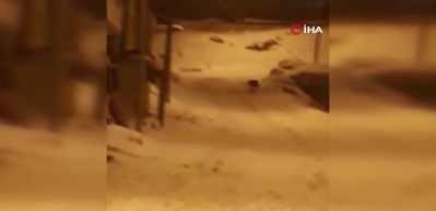 Başkale'de yiyecek arayan kurtlar köpeği parçaladı!