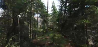 Batı Karadeniz'in gizli kalmış hazinesi Yenice Ormanları