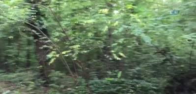 Belgrad Ormanı'nda 'Kaşıkçı' araması