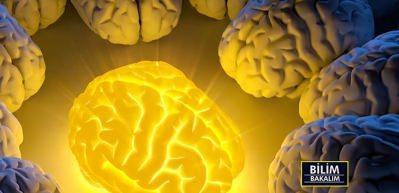Bilim Bakalım - İnsan beyninin gizemi ve özellikleri