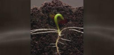 Bir bitki dakikalar içinde büyürse