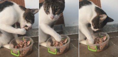 Bu kedi başka kedi! Bakın nasıl yemek yiyor