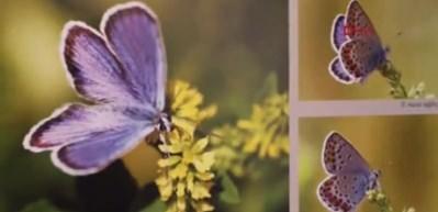Burdur kelebekleri kitap oldu
