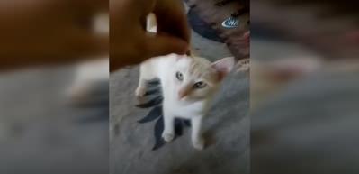 Çekirdek çitleyen kedi sosyal medyanın gündeminde