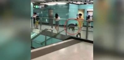 Çin'de metro istasyonuna giren yaban domuzu kadını yaraladı