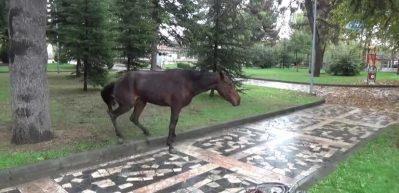 Çocukların gözü önünde vahşet! At çırpınarak can verdi