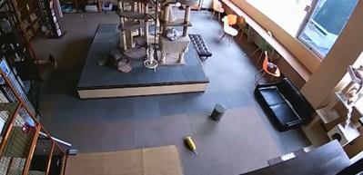 Depremden 10 saniye önce kedilerin yaptığına bakın!