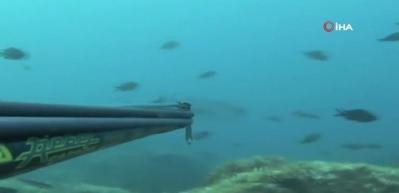 Dev balığın avlanma anı böyle görüntülendi