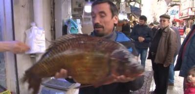 Dev balıklar görenleri şaşırttı