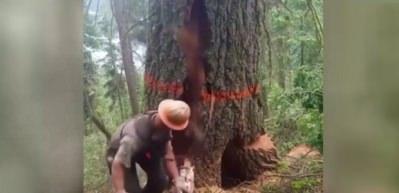 Ağacı keserken üzerine yıkıldı