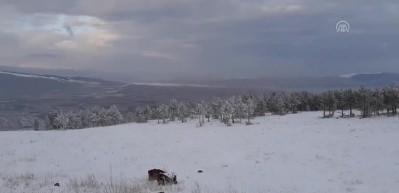 Doğu Anadolu'dan hayran bırakan kış görüntüleri