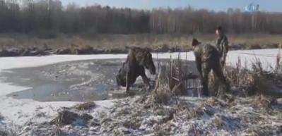 Donmuş gölde mahsur kalan geyik böyle kurtarıldı