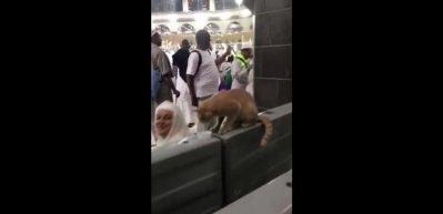 Dünyanın en şanslı kedisi!