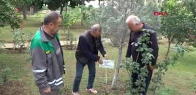 Erdemli'de ağaçlara kimlik kartı çıkartıldı