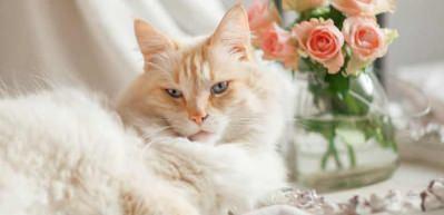 Evcil hayvanları ev bitkilerinden uzak tutmak için ne yapılır?
